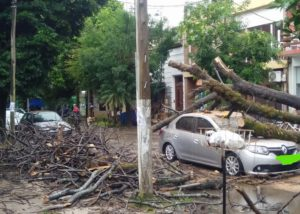 árbol cayó